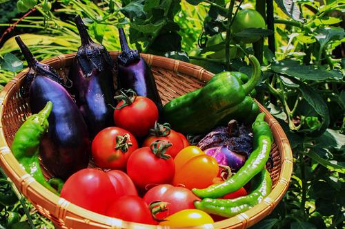 松本人志「果物と野菜の違い?マヨネーズかけて食えるのが野菜だ!」