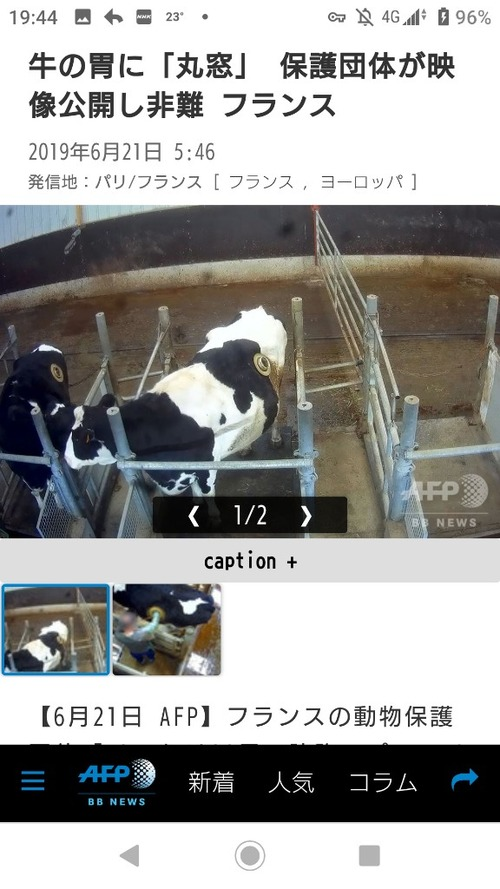 天才フランスさん、牛の胃に手で直接エサを押し込む技術を開発してしまう
