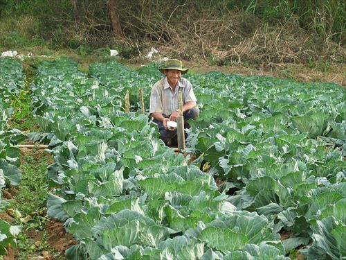 farmer-439914_960_720_R
