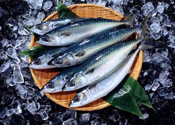 食べ物への偏見 イタリアでは「マイワシやアジなど青魚は下等な魚」
