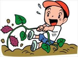 【恐怖】最近の小学校のイモ掘り教室では、こんなクレームが入るらしい・・・