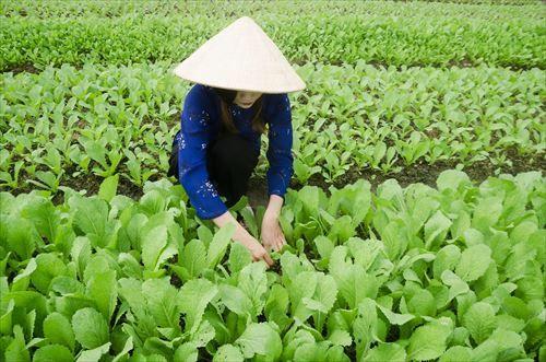 農家っていいよな…慣れるまで大変だけど仕事早く終わるし青空の下でのんびり作業できるし