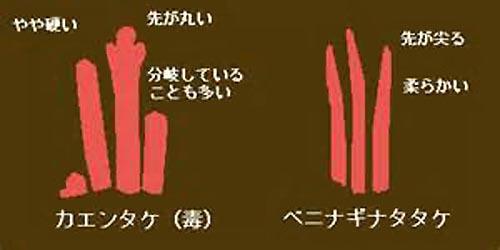 http://livedoor.blogimg.jp/chaaaahan/imgs/7/0/70424a4f.jpg