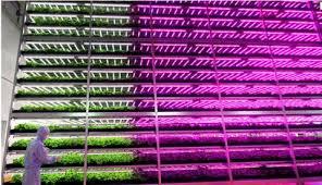これからは野菜は工場で作る時代だ!!←野菜工場の企業が民事再生法申請へ