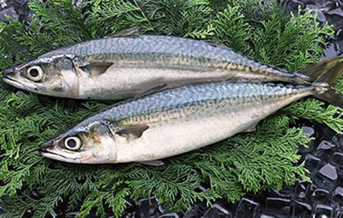サバという過小評価されている魚 煮てよし焼いてよし、攻守共に最強説