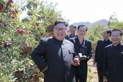 【北朝鮮】金正恩、果樹園を訪れ現地指導。リンゴを手に取り豪快に笑う