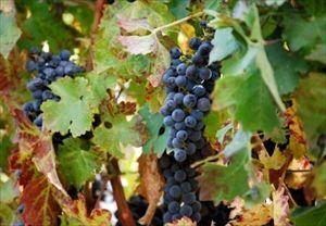 「投資するなら国債より赤ワイン」、研究で高利回り明らかに