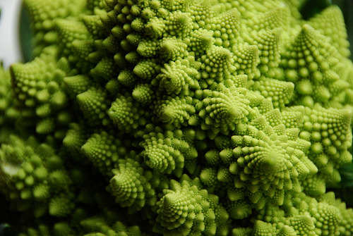 800px-Flickr_-_cyclonebill_-_Romanesco
