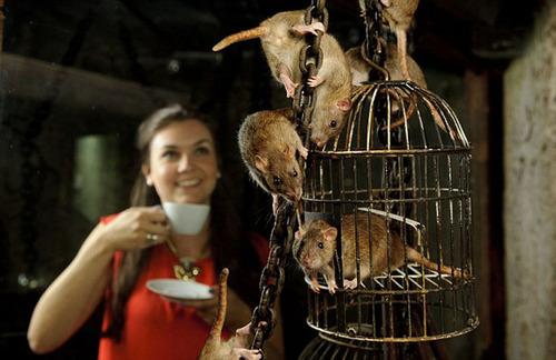 英国で可愛い「ネズミカフェ」がオープン 日本の「ネコカフェ」から着想