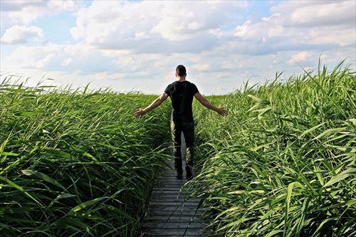 high_grass_walkre_promenade_away-591815_R