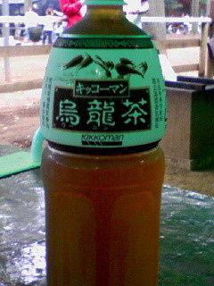 【キッコーマンの烏龍茶】飯田圭織伝説のバスツアーで有名なあの千葉県野田市の巨大迷路が6月に閉園してた