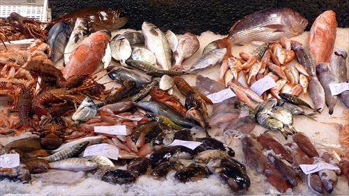 陸の食べ物 VS 海の食べ物
