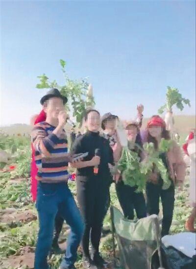 中国で「この畑はタダで大根取り放題!」というデマが拡散→500トン全部引っこ抜かれる