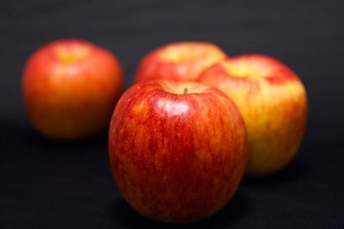 北海道「増毛」の果樹園、リンゴ狩りの観光客で賑わう