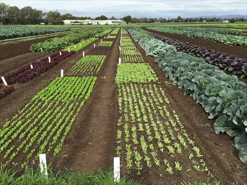 農業みたいな会社勤めにはないストレスフリーな職に憧れる