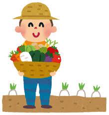 家庭菜園でトマトとキュウリ育ててるけどもう育てて行く自信がない・・・