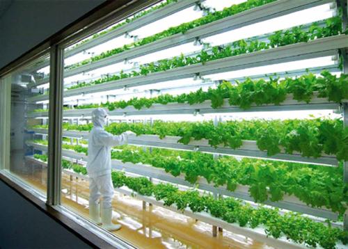LEDの光だけで野菜を育てる「植物工場」…閉鎖 一般農家の野菜に比べの倍以上のコストがかかり赤字に
