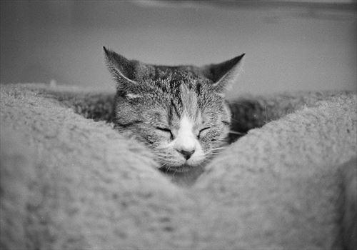 昼飯食ったら、眠くなるあの感覚めっちゃイヤなんやが