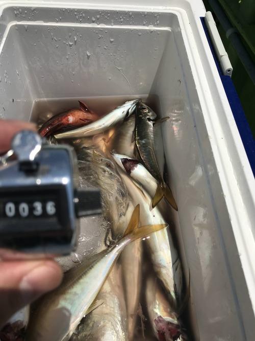 アジ釣りに行ってきた