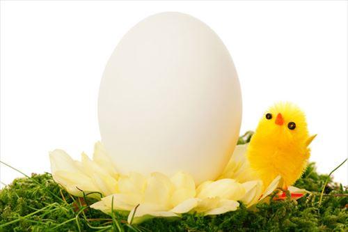 「卵が先か鶏が先か」←んなもん議論の余地なく卵やろwwwwwwww