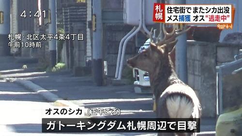 札幌「家賃安い、野菜おいしい、夏涼しい、台風来ない、梅雨来ない、ゴキブリいない」