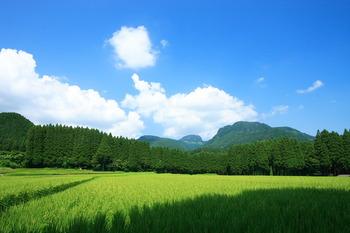 【コメ農家】 所得大幅増 売り上げは北海道2660万円、46都府県が2390万円、法人経営農家は5360万円