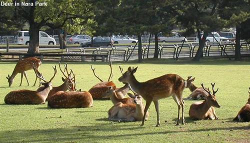 奈良公園の鹿ってなんで鹿せんべい置いてある売店を襲撃しないん?