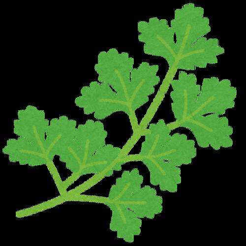 vegetable_pakuchi_coriander