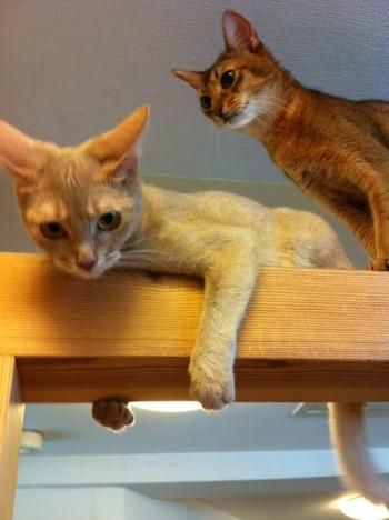 1人で猫カフェ行ってきたったwwwww