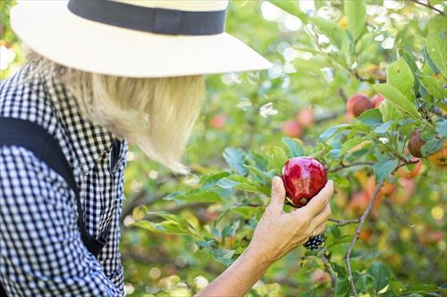 picking-apple-3661798_1280_R
