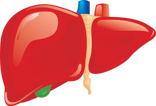 肝臓「よせ」腎臓「よせ」膵臓「よせ」胃「よせ」脳「ええんやで」