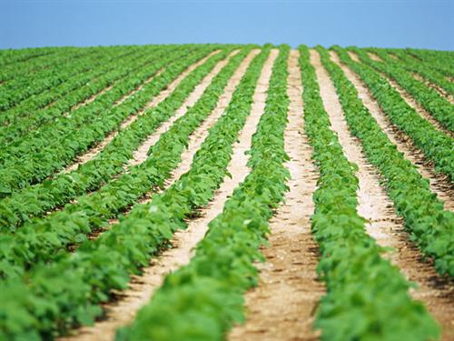 厚労省「30~40代のニートたちを自立させたい。農家で仕事体験してもらおう」