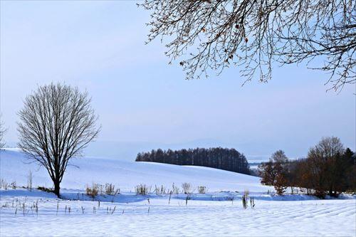 北海道住むメリット→台風来ない、梅雨無い、ゴキブリ出ない、飯旨い  デメリット→雪が降る