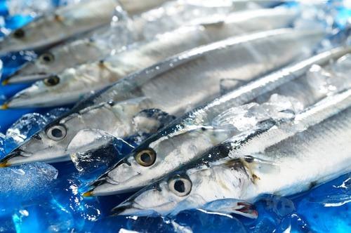サンマ漁4ヶ月で600万稼ぎ8ヶ月オフ