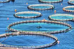 養殖の魚がまずいという風潮