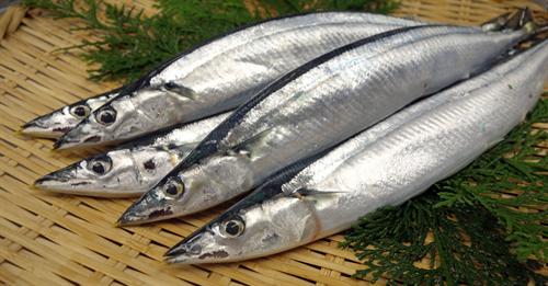 サンマ 記録的な不漁で食卓にも影響 販売価格が去年の2倍で100円前後