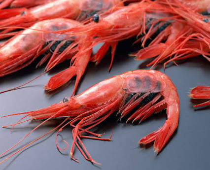 「虫食べるとかあり得ない」←でもお前蟹とか海老食ってるじゃん