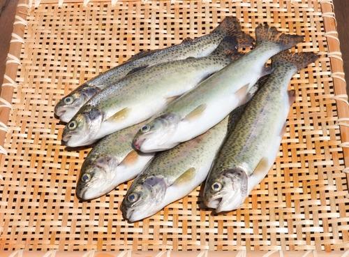 【悲報】食べて美味い淡水魚、1つも存在しない