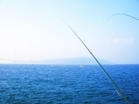 アジとかいう釣りやすくて美味い魚