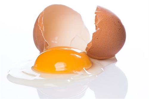 卵は1日1個まで。長年の論争に決着?→全然決着してませんでした・・・・