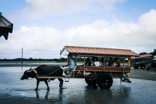 牛車「公道走れます。免許要りません。維持費無料です。最悪食えます」←これが日本で流行らない理由