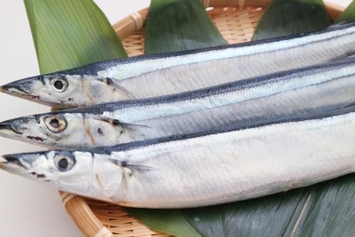 水産庁「サンマが不漁?ふむ、では年中獲ってみてはどうだろうか」