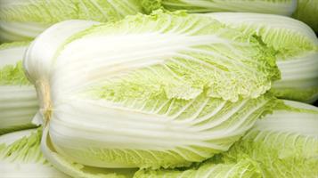 庶民「白菜が高すぎて買えないの!」 農家で白菜500個盗まれる 15万円相当
