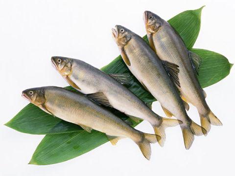 魚は養殖より天然が美味しい ←こんなデマを広めたのは誰だぁっ!