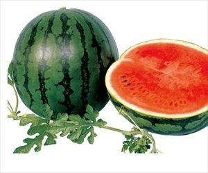 トマトやスイカが野菜にカテゴライズされてることに納得がいかない
