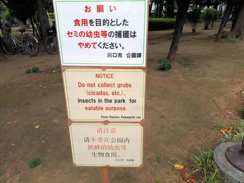 「食用を目的としたセミの幼虫等の捕獲はやめて」 公園で幼虫を大量に捕る人が出没する