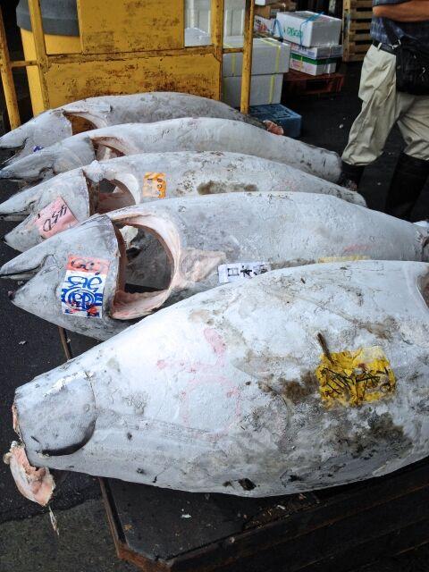 1.9億円で落札の一番マグロ、釣ったのは山本昌親子と判明