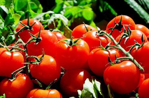 うわああああ! トマトに毒が含まれていることが判明! 1日にトマト4トン食べると死ぬ!