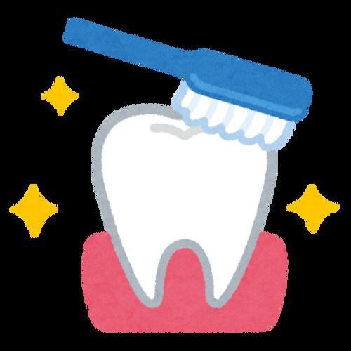 歯「一晩磨かないと虫歯になるぞ」
