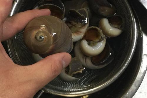 ワイ、取ってきたカタツムリを煮付けて食う